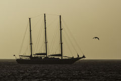 Tallship at sunrise. This tallship was sailing on a calm sea at sunrise off the East coast of the UK. The ship and a passing seagull are silhouetted against a Stock Photos