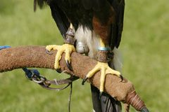 Talons Stock Photo