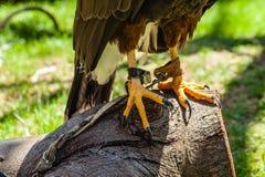 Talons Stock Image