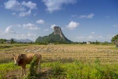 Talu van Khaoaok Royalty-vrije Stock Fotografie