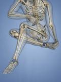 Talus Bone, 3D Model Royalty Free Stock Photos
