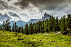 Taly, Dolomites - a wonderful landscape, meadow among pine Stock Photography