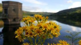 Talybont-Reservoir Stockbild