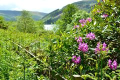 Talybont-on-Usk valley and reservoir Royalty Free Stock Images