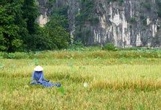 Tam Coc, Vietnam - 8. Juni 2019: Vietnamesische Landwirte ernten Reis in Tam-coc lizenzfreie stockfotos