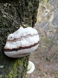 Tam jest pasiasty ślimaczka dom na drzewie obrazy stock