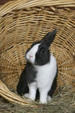 Tam konijn Royalty-vrije Stock Afbeeldingen