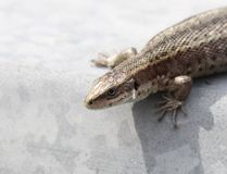Tamaño de Dragon Mini imágenes de archivo libres de regalías