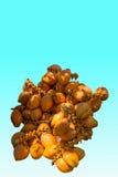 Tamaño de ocho Sanya del área turística de la cueva del soporte de fruta del coco del ‹del †del ‹del †Imagenes de archivo