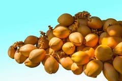 Tamaño de ocho Sanya del área turística de la cueva del soporte de fruta del coco del ‹del †del ‹del †Fotos de archivo