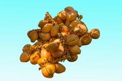 Tamaño de ocho Sanya del área turística de la cueva del soporte de fruta del coco del ‹del †del ‹del †Fotografía de archivo libre de regalías