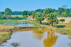 Tama na zatoczce, Bago region, Myanmar Zdjęcie Stock
