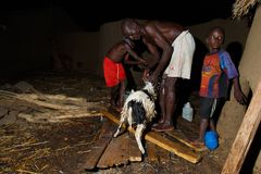 TAMALE, GHANA � MARCH 23: Unidentified  African  boys help fathe Royalty Free Stock Photos