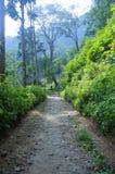 Taman Hutan Raya Zdjęcie Royalty Free