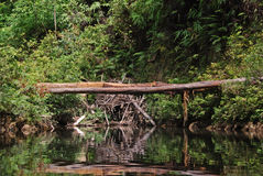taman naturalny Malaysia bridżowy negara obraz royalty free