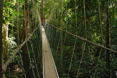 Taman Negara in Malesia immagine stock libera da diritti