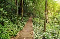 Taman Negara National Park Royalty Free Stock Image