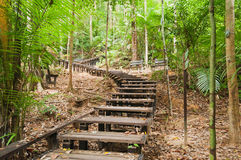 Taman Negara National Park Royalty Free Stock Photography