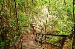 Taman Negara National Park Royalty Free Stock Images