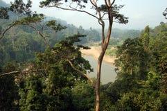 Taman Negara - vista della foresta Fotografia Stock