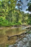 Taman Rimba Ampang Royalty Free Stock Photos