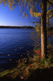 Tamarac and Lake. Tamarac and Upper Michigan lake in fall Stock Photos