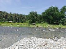 Tamaraw het weiden op rivieroever in landelijk tropisch platteland van Mindoro, Filippijnen stock afbeelding