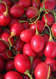 Tamarillo. Market fresh ripe Tamarillo fruit Stock Photography