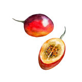 The tamarillo isolated on white background, watercolor illustration set. In hand drawn style Stock Illustration