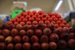 Tamarillo ou tomate de arbol et tomates normales d'une manière ordonnée empilés dans de grandes piles photos libres de droits