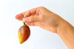 Tamarillo by the Stem. A tamarillo fruit held by its stem by the hand of a young woman, isolated on white Royalty Free Stock Images