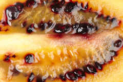 Tamarillo (tree tomato) - close up Royalty Free Stock Photography
