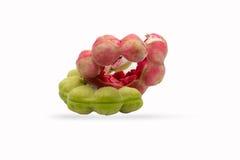 Tamarind της Μανίλα φρούτα που απομονώνονται στο άσπρο υπόβαθρο Στοκ Φωτογραφία