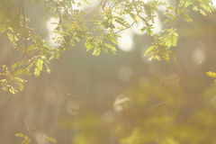 Tamarind branch. Sunlight shining to tamarind branch in the morning Stock Image