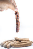 Tamarind, dangling from hand isolated on white background Stock Image
