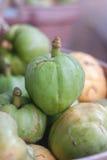 Tamarind de Malabar Fotografia de Stock Royalty Free