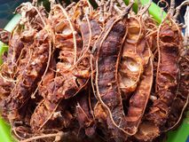 Tamarind fruit Royalty Free Stock Photo
