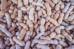 Tamarind fruit. Group of tamarind, sweet and sour favour Stock Photos