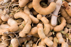 Tamarind Fruit on a market stall, Cambodia Royalty Free Stock Photos
