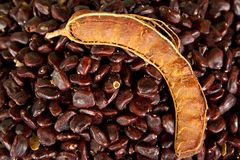 Tamarind fruit Stock Photos