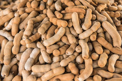 Tamarind fruits Royalty Free Stock Images