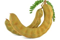 Tamarind fruits Royalty Free Stock Photo