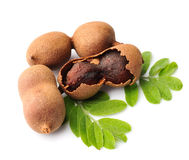 Tamarind with leaves Royalty Free Stock Photo