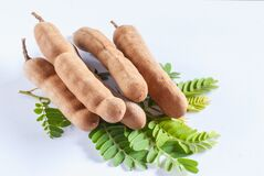 Tamarind plant on leaves Royalty Free Stock Photography