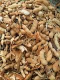 Tamarind seco Imagens de Stock