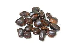 Tamarind seed Stock Image