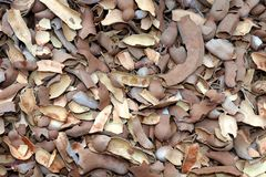 Tamarind shell heap, tamarind texture shell background stock photo