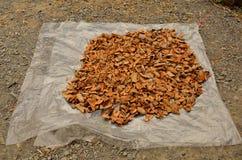 Tamarind shell. Royalty Free Stock Image