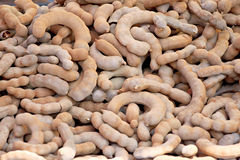 Tamarind of stacked in abundance. Royalty Free Stock Photography