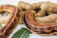 Tamarind Sweet. Asian sweet tamarind fruit is sweet Royalty Free Stock Images